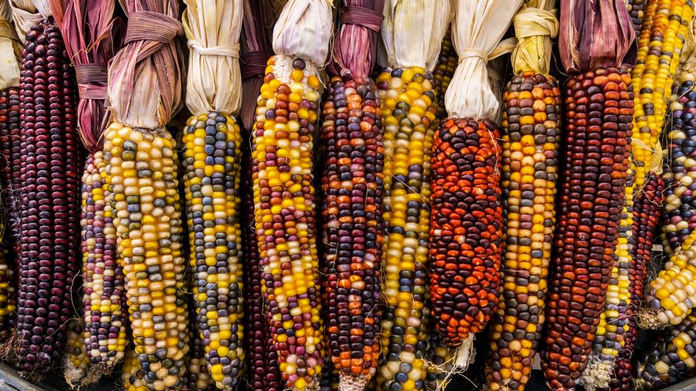 Importación de maíz ¿Amenaza o control?